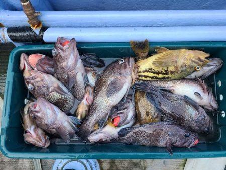 小樽港遊漁船SHAKE 釣果