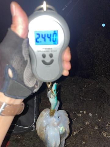 【2キロアップ】春イカエギングでアオリイカ