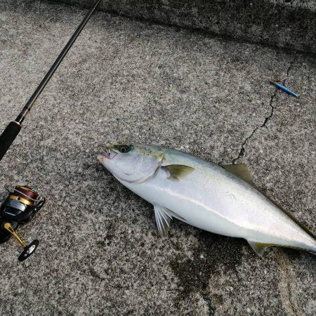 メジロ釣れました。