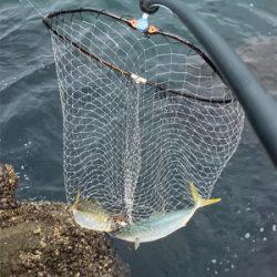 三魚種ゲット