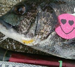 『釣りデビュー(^^)』193日目