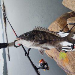 本浦海岸で磯釣り&渚釣り
