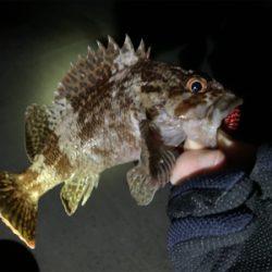 色々釣れる!