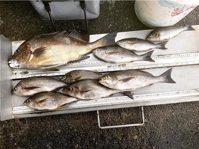 タイラ フカセ釣り