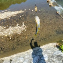 夏の川遊び