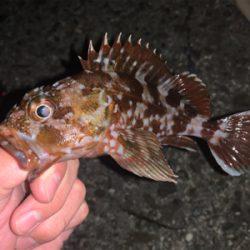 太刀魚調査からけんさきまで。