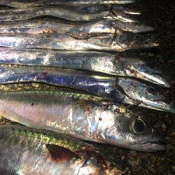 太刀魚と大サバ