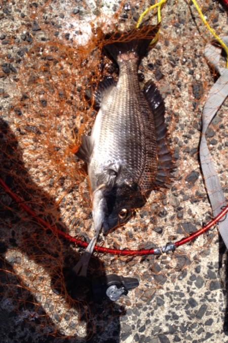 のんびり紀州釣り