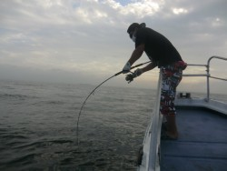 BIG-ONE 釣果