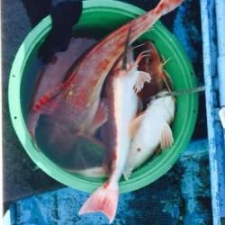 征海丸 釣果