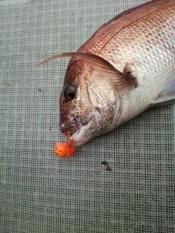 チャモロ 釣果