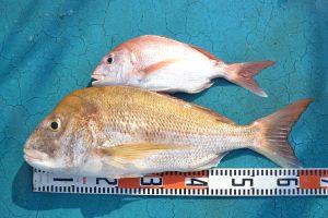 アジアマリンサービス 釣果